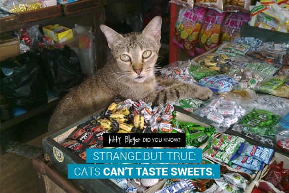 Cat Facts: Strange but true: cats can't taste sweets.
